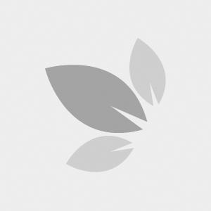 03-02-002 Tappo pieno conico in silicone per botti